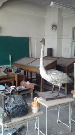 ある廃校 3